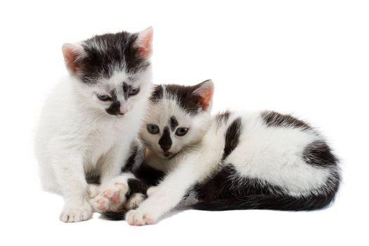 close-up two kittens, isolated on white