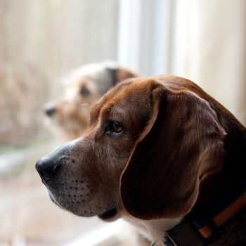 Dogs with Separation Anxiety