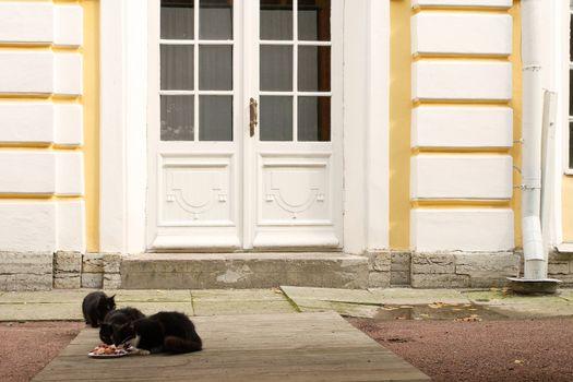 Feeding the palace cats in Garden of Peterhof, Petersburg, Russia.