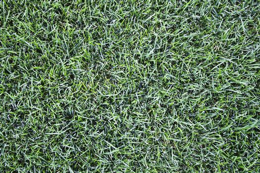 A patch of perfectly manicured grass in Wyoming in the summer.