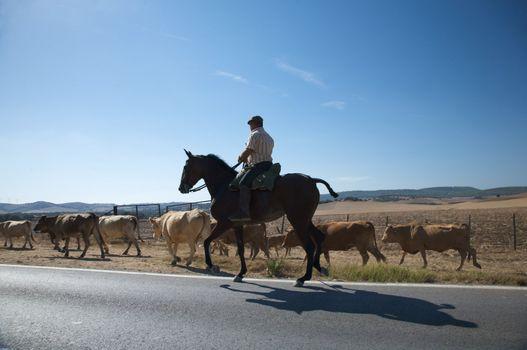 spanish cowboy