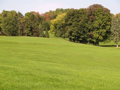 view of many trees by a large green lawn