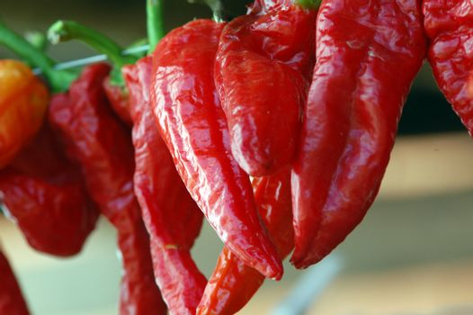 red pepper dried