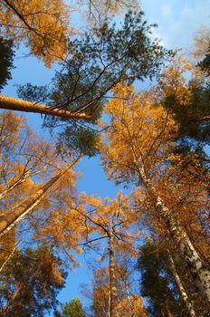 Autumn trees vertical