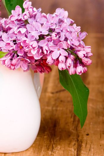lilac blooms