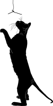 silhouette of a cat, a black silhouette, cat sphinx, purebred cat, cat sitting, cat sat down, a cat plays, long legs, big mustache