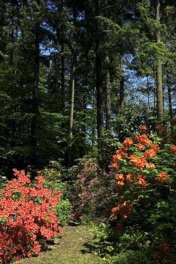 summer scenic. forest and flowers
