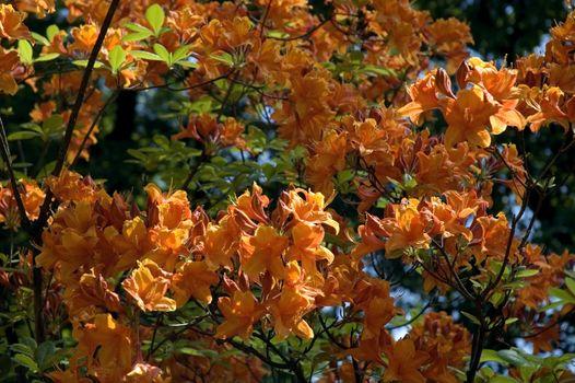 summer scenic. flowers