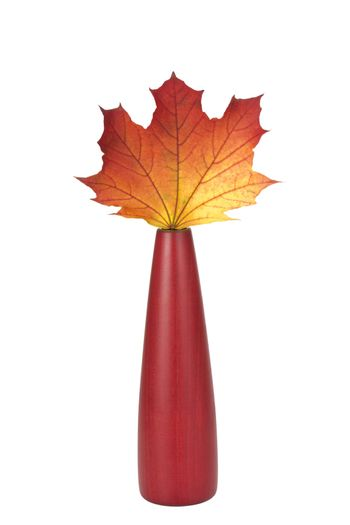 single autumn maple leaf in a red vase