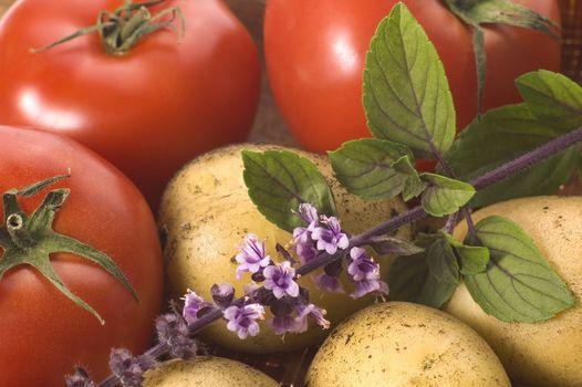 cut fresh herbs and vegatables