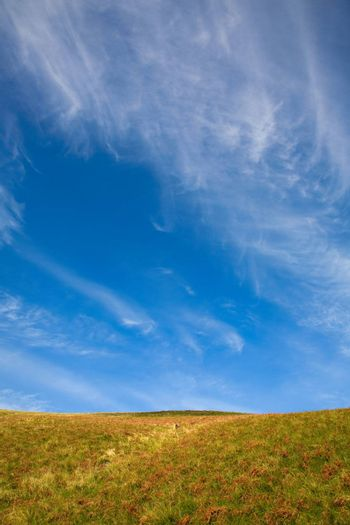 Simple landscape. Field against blue sky with beautiful colors and copy space.