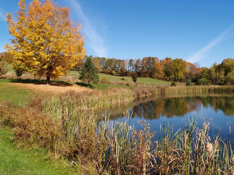 a pond in the country in autumn