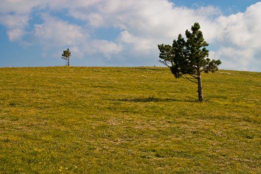 highland tree