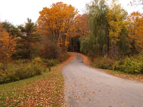 country road with fallen colorful leaves in autumn