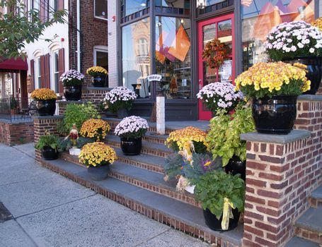 fall mums by a store front on mainstreet
