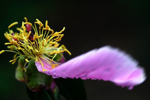 Flowers and plants, herbaceous plants,