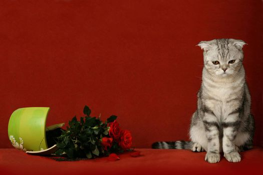 Accused cat and a broken pot of flowers