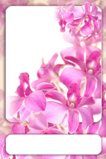 romantic orchid frame