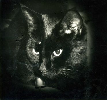 Cat with star in one eye caused by a flash