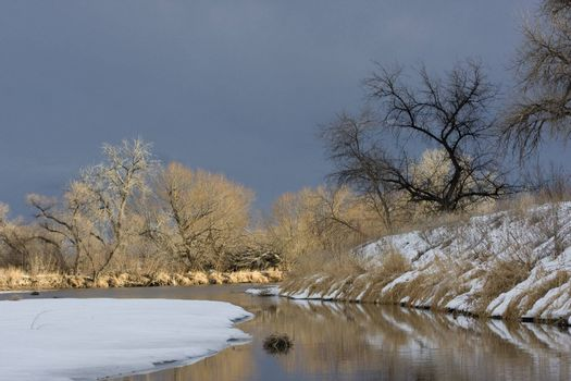Riparian forest along South Platte River in eastern Colorado