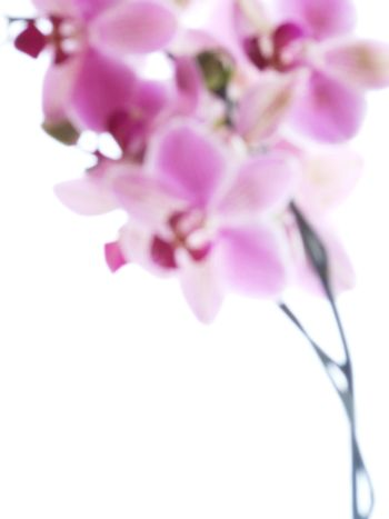 Closeup of a purple orchid - blurred image - isolated on white