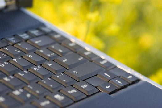 Detail of a laptop outside in a field of yellow flowers