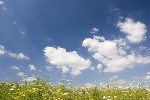 Meadow with flowers against a blue cloudscape