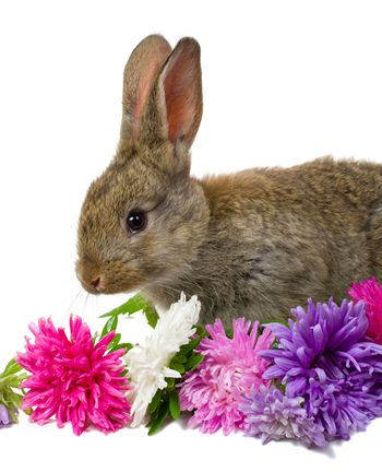 close-up bunny and flowers, isolated on white
