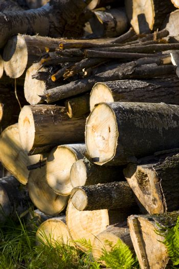 Woodpile on a September Afternoon