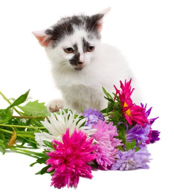 kitten sitting with flowers, isolated on white