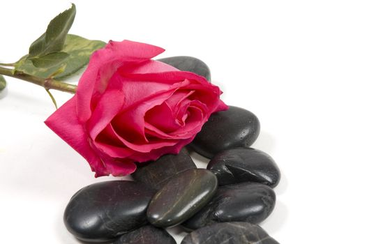 pink rose with spa stones isolated on white
