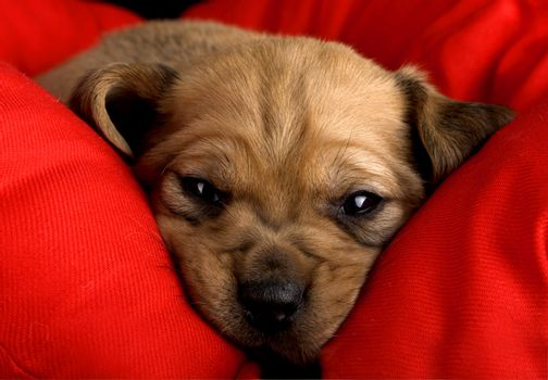 Sadness Puppy