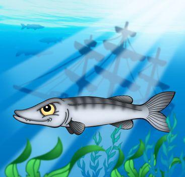 Barracuda with shipwreck - color illustration.