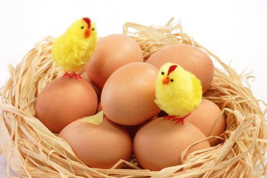 Easter chicks in the nest