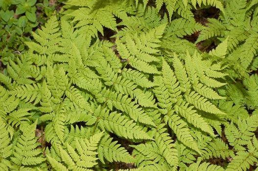 The texture representing green leaves of a fern