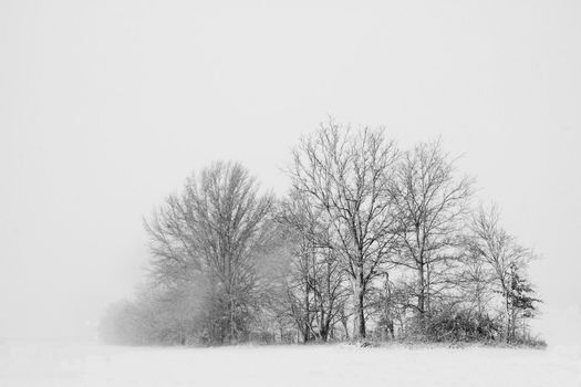 Trees in a snow storm stand out against a white sky and snow covered land.