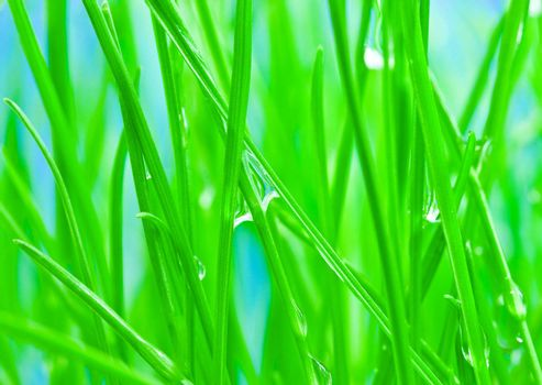 Close-up morning dew on green grass for background