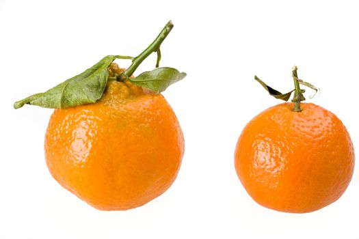 two tangerines isolated on white background