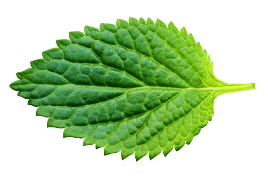 A beautiful lush green leaf