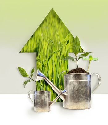 Plantings with watering can