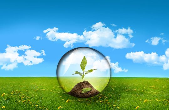 Glass sphere with plant in a field of grass