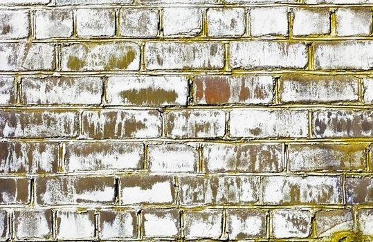 Brick wall struck by a fungus