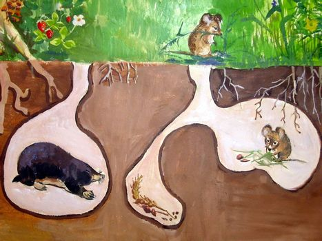 Painted picture with various underground living animals