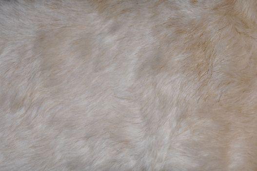 closeup view of multi-colored dog fur
