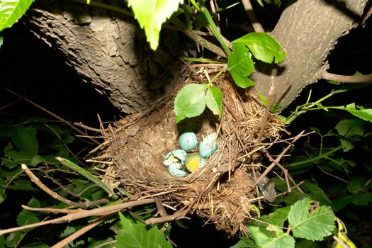 the abandoned nest is a bird