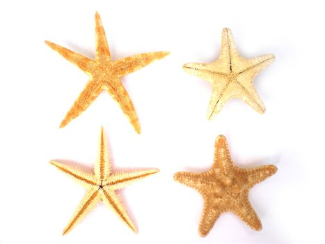 four beautiful starfish isolated on white background