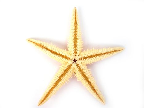 a beautiful starfish isolated on white background