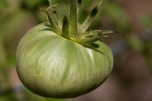 Green Tomato Closer