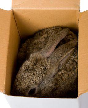 small bunny hiding in box