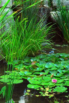 Pond landsaping